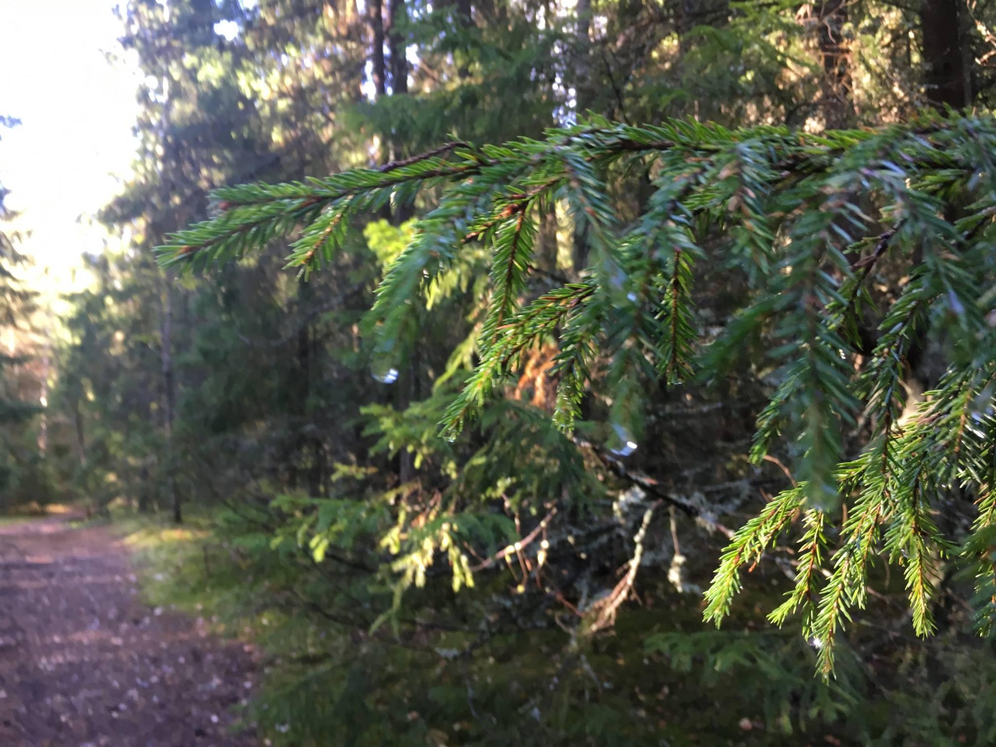 Metsä on vastapainoa ruutumaailman infotulvalle – aivot lepäävät kuin itsestään